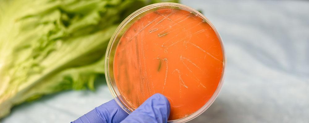 Chicago listeria poisoning attorney