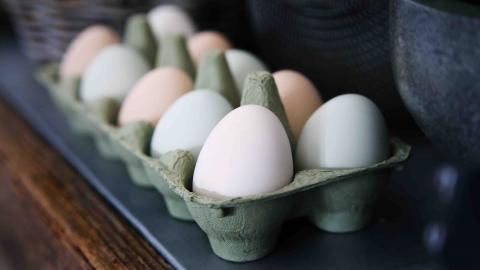 Hundreds of Millions of Eggs Recalled Amid Salmonella Concerns