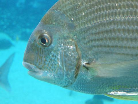 Increased Food Poisoning Cases from Florida Fish